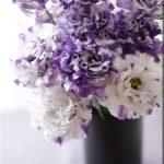 今日も紫の花束を